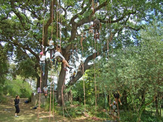 arbre à musique